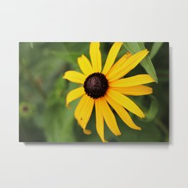 Black Eyed Susan Metal Print