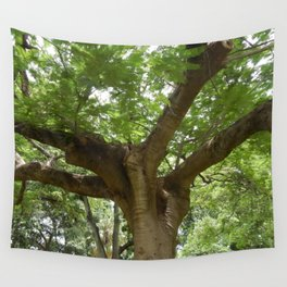Poinciana Tree Trunk and Leaves Wall Tapestry