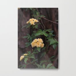 Yellow  Blooms Metal Print