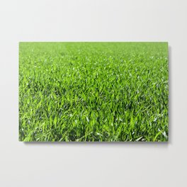 Green grass field in a sunny day Metal Print