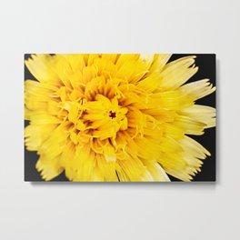 Macro of yellow dandelion petal Metal Print
