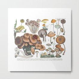 Vintage Mushrooms Metal Print