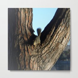 A Squirrel at Griffith Park, California Metal Print