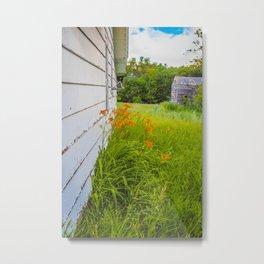 Farmhouse Lilies, North Dakota 4 Metal Print
