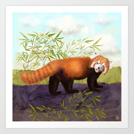 The Little Red Panda Art Print