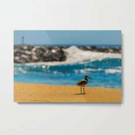 Wedge Sandpiper Metal Print