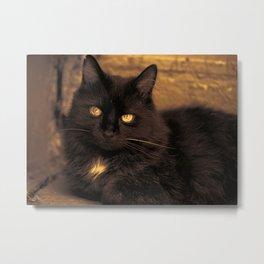 Golden Eyed Kitty Metal Print