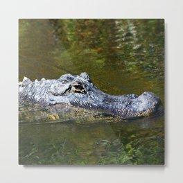 Wild Gator Metal Print