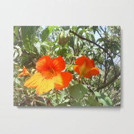 Loving Flowers Metal Print