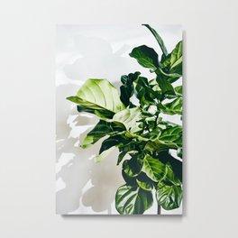 Fiddle Fig Metal Print