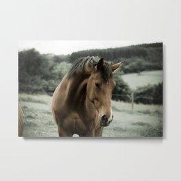 Gentle Brown Horse in a Meadow Metal Print