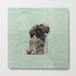 Sketch  of fluffy  Pekingese puppy Metal Print
