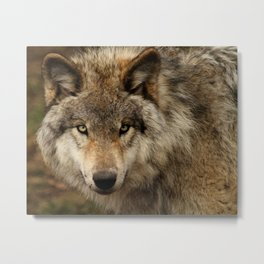 Undivided attention Metal Print