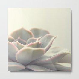 Echeveria Succulent #2 Metal Print