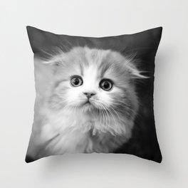 Scottish Fold Kitten Throw Pillow