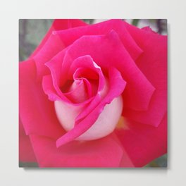 Rose Two-Tone Metal Print