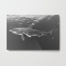 Oceanic Whitetip Shark, B & W Metal Print