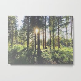 sunlight through the forest trees Metal Print