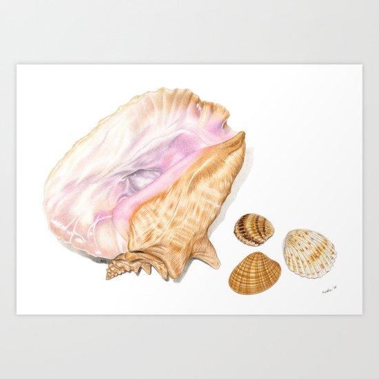 Seashells 01 by aureliaart