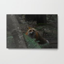 Fluffy Fox Metal Print