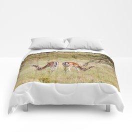 Fallow deer Comforters