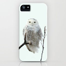 Snowy in the Wind (Snowy Owl 2) iPhone Case