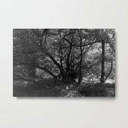 Trees near the River Metal Print