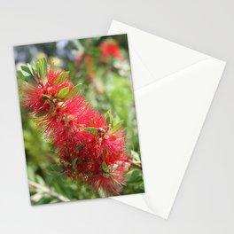 Calliandra Haematocephala Red Powderpuff  Stationery Cards