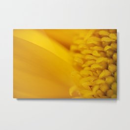 Macro Photo of a beautiful Sunflower. Metal Print