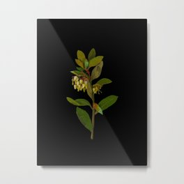 Arbutus Unedo Mary Delany Delicate Paper Flower Collage Black Background Floral Botanical Metal Print