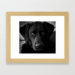 Loyalty  Black Lab  Framed Art Print