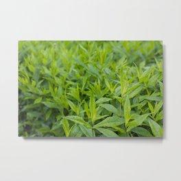 Lush greenery Metal Print