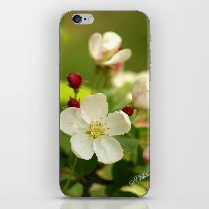 Budding trees iPhone Skin