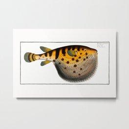 Marcus Elieser Bloch - Starry Globe-fish Metal Print