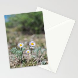 Daisies in Colorado Stationery Cards