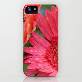 Pink Gerber Daisy with Rain Drops iPhone Case