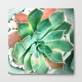 Succulent in Pot With Tiny White Stones Metal Print