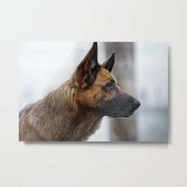 A German Shepherd Metal Print