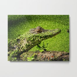 Not Easy To Be Green Metal Print