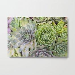 Bountiful Succulents Metal Print