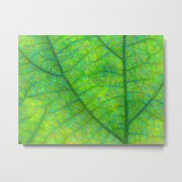Leaf Macro Photo Painting Metal Print