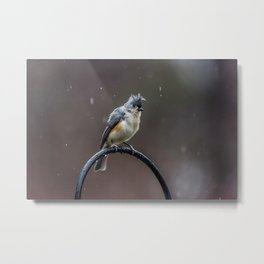 Tufted Titmouse shaking off the rain Metal Print