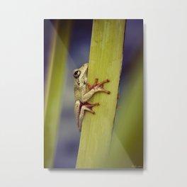 Arum lily frog - Animal Photography #Society6 Metal Print