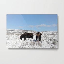 Moose in Antelope Flats Metal Print
