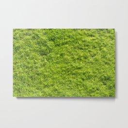 Field of fresh green grass Metal Print