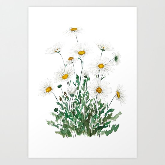 white Margaret daisy watercolor by colorandcolor