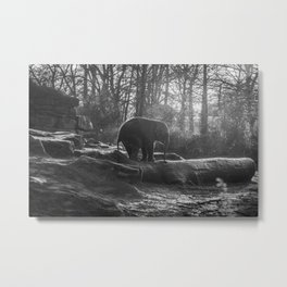 Elephant Black and White Photograph Metal Print