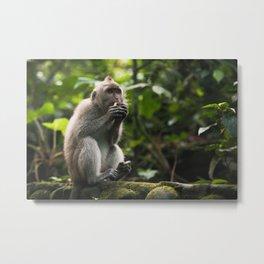 Monkey eating - Sacred Ubud Monkey Forest in Bali Metal Print