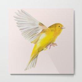 Canary in Flight Metal Print