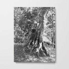 B & W Historic Tree Metal Print